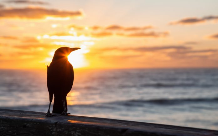 How to Be the Early Bird Who Gets the Worm